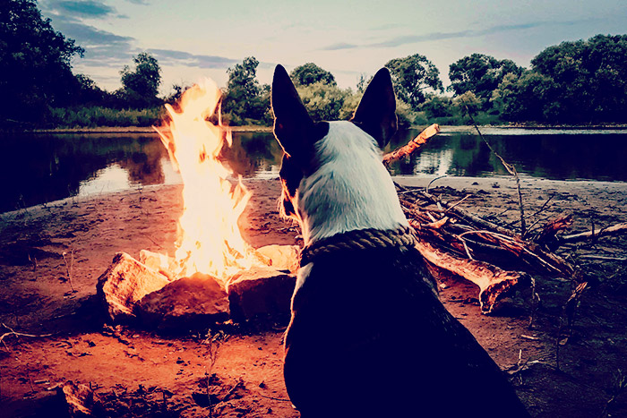 Dog Friendly Camping WA – 7 Must Visit Campsites That Allow Dogs